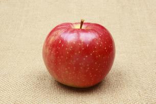 りんごの写真素材 [FYI04236781]