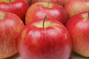 りんごの写真素材 [FYI04236910]