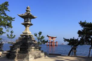 宮島の大鳥居の写真素材 [FYI04237482]