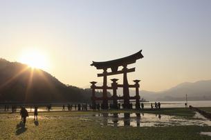宮島の大鳥居の写真素材 [FYI04237765]