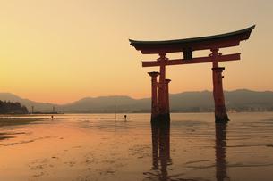 宮島の大鳥居の写真素材 [FYI04237776]