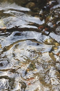 藍場川の写真素材 [FYI04238222]
