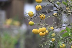 果実の写真素材 [FYI04238332]