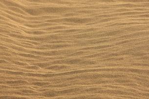 鳥取砂丘の風紋の写真素材 [FYI04238738]