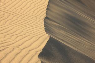 鳥取砂丘の風紋の写真素材 [FYI04238790]