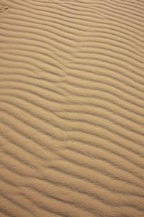 鳥取砂丘の風紋の写真素材 [FYI04238796]