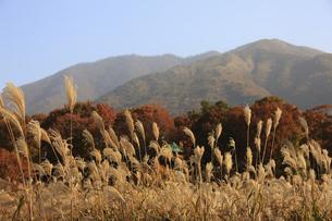 蒜山とススキの写真素材 [FYI04238985]