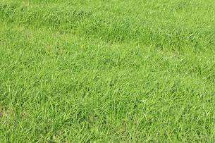 蒜山高原の草原の写真素材 [FYI04239038]