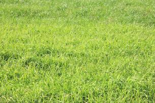 蒜山高原の草原の写真素材 [FYI04239042]