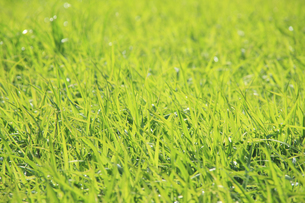 蒜山高原の草原の写真素材 [FYI04239046]