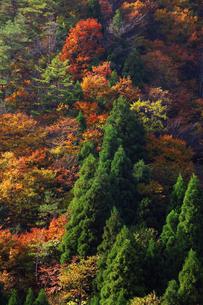 紅葉の山の写真素材 [FYI04239085]