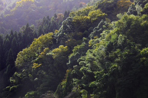 紅葉の山の写真素材 [FYI04239088]
