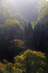 紅葉の山の写真素材 [FYI04239091]