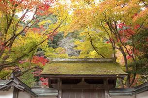 秋色の室生寺表門のイラスト素材 [FYI04239702]