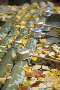 手水舎に積る落ち葉の写真素材 [FYI04239706]