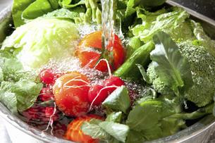 シンクで洗う色々な野菜のイラスト素材 [FYI04240127]
