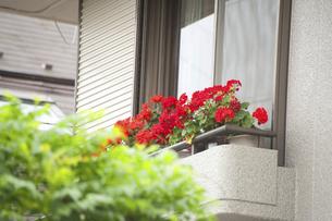 窓辺の花のイラスト素材 [FYI04241350]