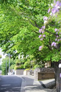 石神井町の住宅街の写真素材 [FYI04241404]