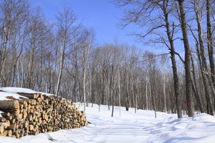 林業の写真素材 [FYI04242515]