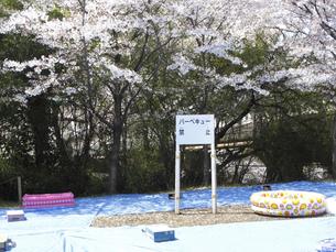 桜の花見会場のバーベキュー禁止看板のイラスト素材 [FYI04247315]