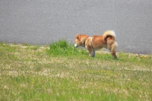 河川敷公園を散歩するペットの犬の写真素材 [FYI04247673]
