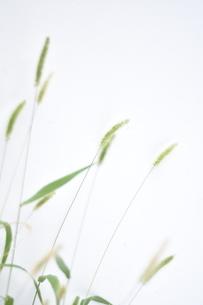 静かな植物の写真素材 [FYI04248306]