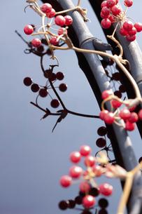 サンキライの実と竹炭の写真素材 [FYI04248382]