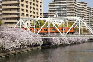 川沿いの桜並木と鉄道の写真素材 [FYI04252925]