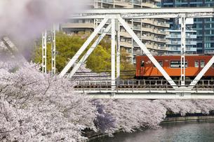 川沿いの桜並木と鉄道の写真素材 [FYI04252928]