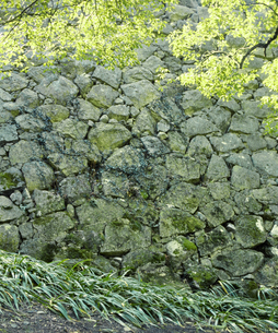 新芽の紅葉がさわやかな姫路城の石垣のイラスト素材 [FYI04254226]