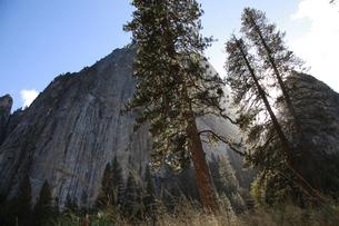 湿原から見上げたカテドラル・ロックと大木の写真素材 [FYI04254655]