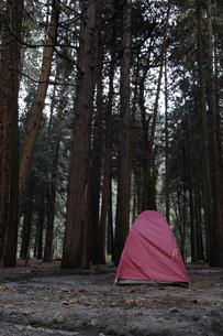 朝のキャンプ4(フォー)の写真素材 [FYI04254680]
