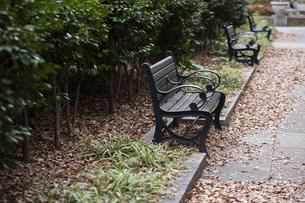 公園のベンチの写真素材 [FYI04262098]