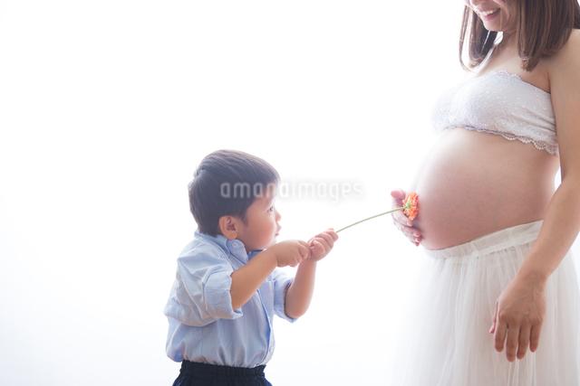 男の子と花で遊ぶ妊婦さんの写真素材 [FYI04265015]