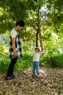 落ち葉で遊ぶ園児の写真素材 [FYI04267781]