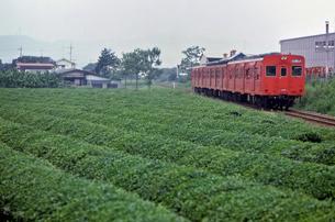 川越線のキハ35気動車と狭山丘陵の茶畑の写真素材 [FYI04270326]