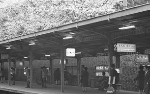 桜満開の茗荷谷駅の写真素材 [FYI04270397]