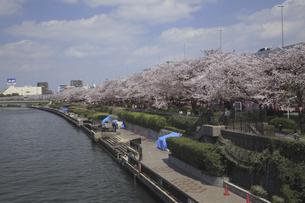 隅田川沿いの桜の写真素材 [FYI04272209]