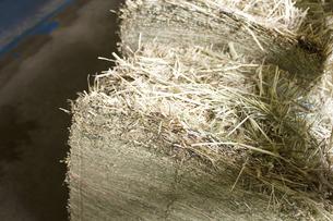 六甲牧場の牛舎の干し草の写真素材 [FYI04274090]