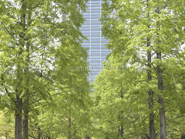 神戸東遊園地の並木と神戸市役所の写真素材 [FYI04274105]