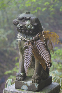 大阪和泉葛城山石宝殿の狛犬の写真素材 [FYI04274470]
