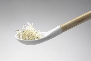 陶器製のスプーンに盛られたシラス干しの写真素材 [FYI04275240]