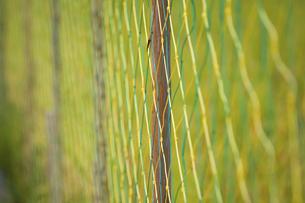 水田の防護ネットの写真素材 [FYI04276788]