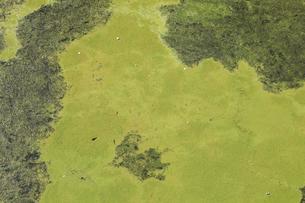 異常に発生した池の水面の藻とゴミの写真素材 [FYI04277391]