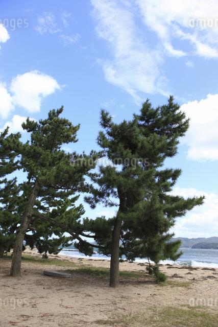 天橋立の砂浜の写真素材 [FYI04277738]