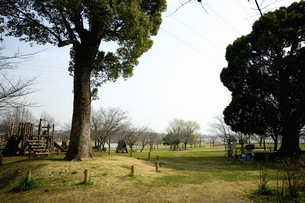 芝生と木のイラスト素材 [FYI04278677]