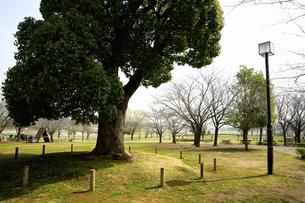 芝生と木のイラスト素材 [FYI04278686]