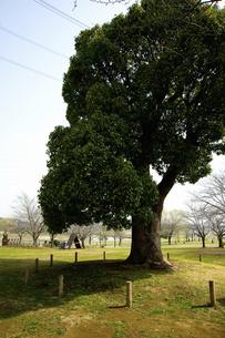 芝生と木のイラスト素材 [FYI04278691]