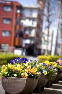 花壇のある街のイラスト素材 [FYI04278695]