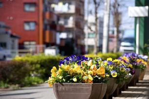 花壇のある街のイラスト素材 [FYI04278707]